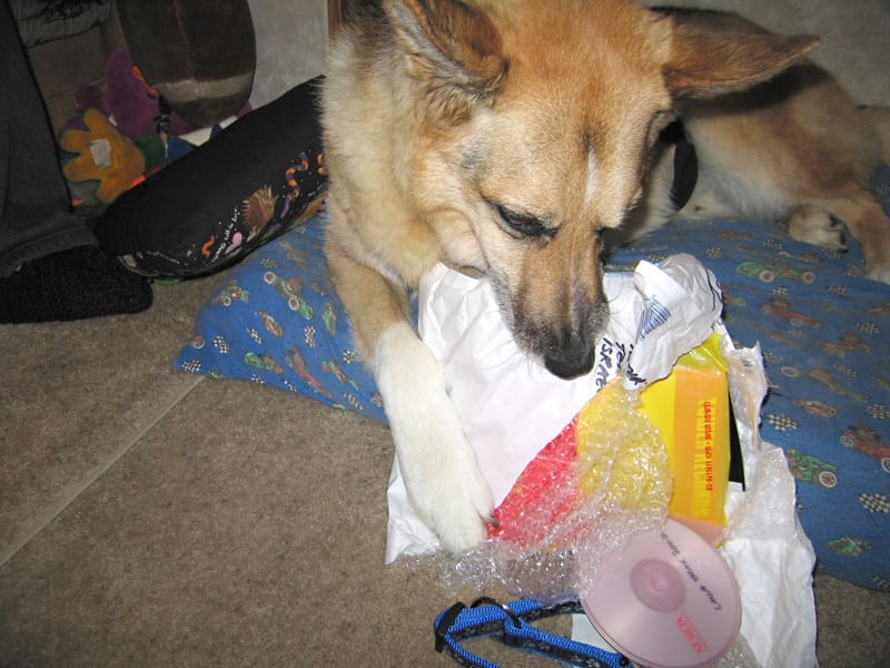 Jerry uses his one paw to open a gift from Lalla