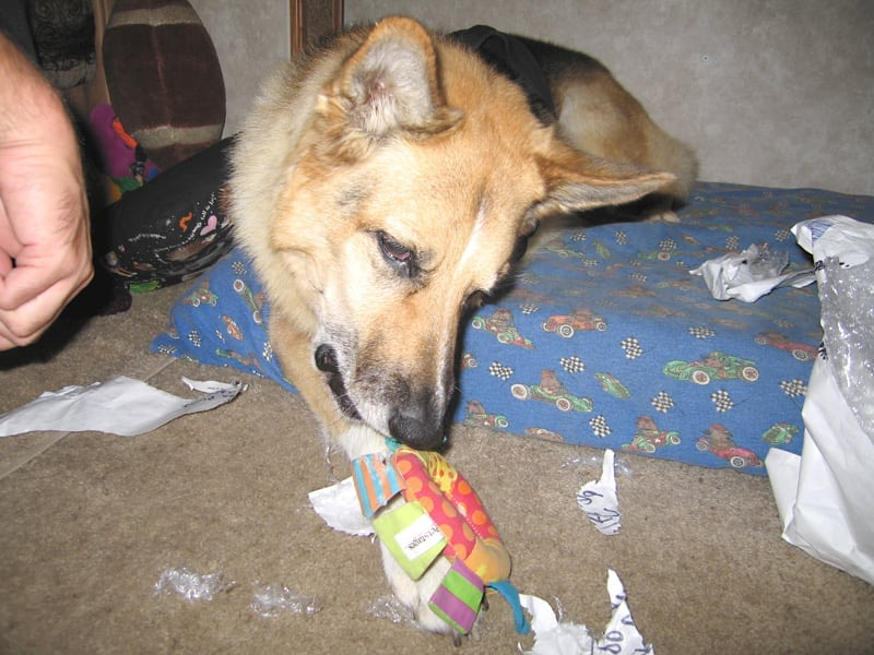 Mmmm... this toy smells like Lalla!