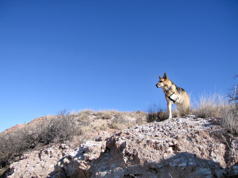 Standing watch at Bottomless Lakes NM State Park