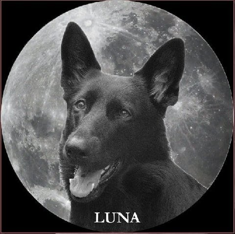 Cancer dog warrior Luna, memorial photo