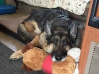 Wyatt rests on his OneCure Dog.