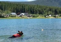 Wyatt swims at Carcross, Yukon