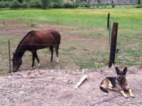 Wyatt guards horses