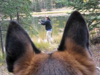 Tripawd GSD Wyatt Fishing at Vickers Upper Ranchupperranch01
