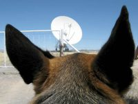 Wyatt listens for aliens at the VLA