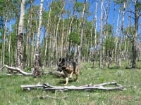 Wyatt helps gather wood at the Upper Ranch