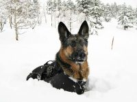 Wyatt in the Snow with Ruffwear Gear