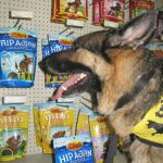 Zukes honor Tripawds at That Pet Place