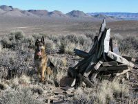 Wyatt at Basin and Range BLM National Monument
