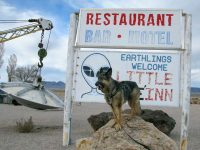 Wyatt watches out for for ET in Rachel, NV
