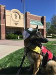 Colorado State University Flint Animal Cancer Center