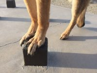 Tripawd Core Strengthening