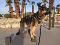 Tripawd exercise