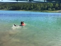 Wyatt swims in the Yukon River
