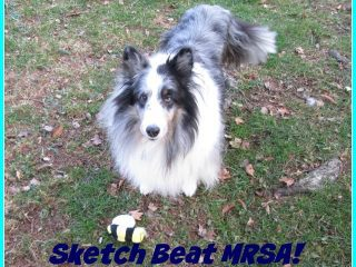 Tripawd Sketch beats MRSA