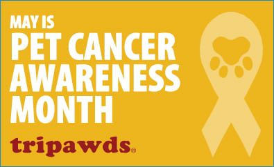 Tripawds, pet cancer, That Pet Place, fundraising, awareness