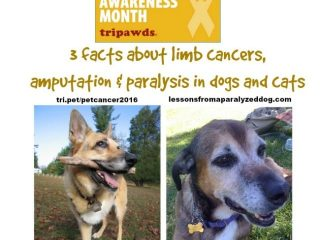 limb cancer, amputation, paralysis, dogs, cats