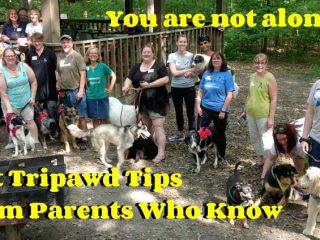 Tripawd Tips video