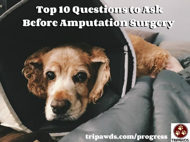Top 10 Questions to Ask Before Amputation Surgery for Dogs and Cats