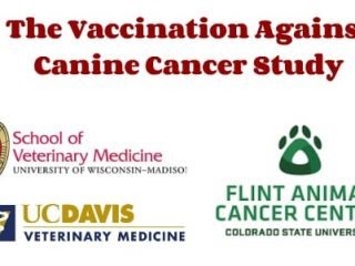 Vaccination Against Canine Cancer
