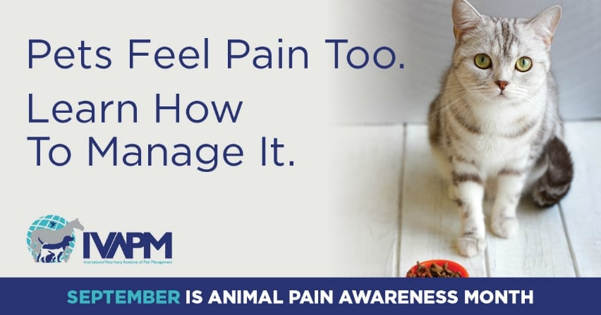 Pain Signs in Cats