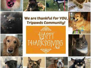 help Tripawds thanksgiving