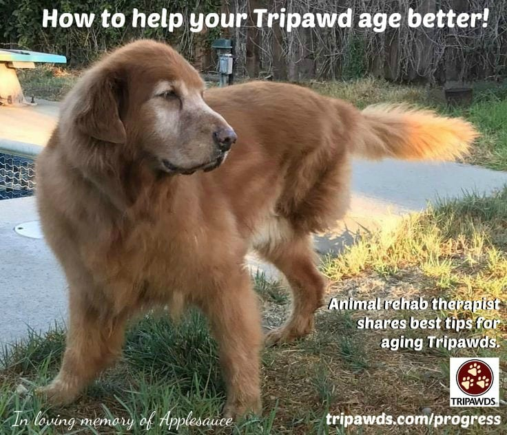 aging Tripawd tips