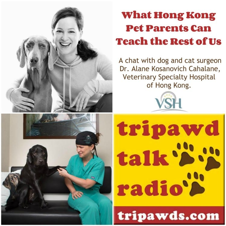 what Hong Kong pet parents can teach us
