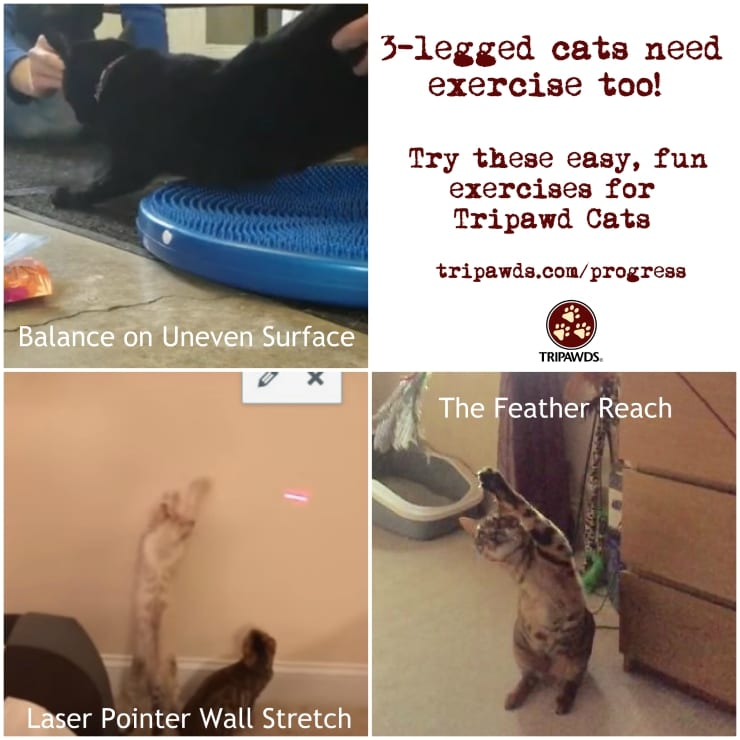amputee cat exercise