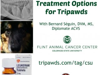 lung metastasis treatments for Tripawds