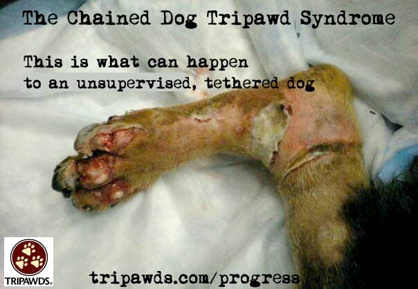 chained dog tripawd syndrome