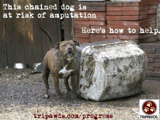 Chained Dog Tripawd Syndrome2