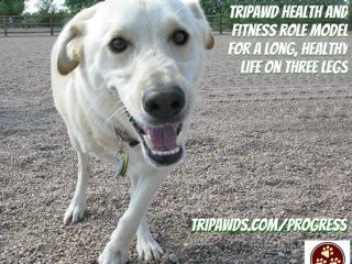 Tripawd health and fitness Spree