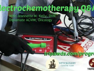 electrochemotherapy pet cancer treatment