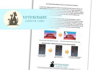 electrochemotherapy pet cancer treatment information