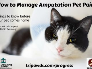 manage amputation pet pain
