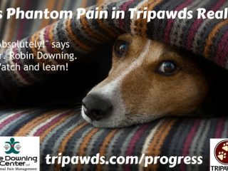 Tripawd pain management