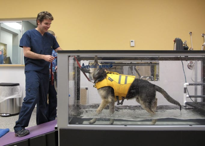 amputee pet physical therapy