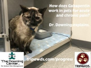 how Gabapentin works in Tripawds