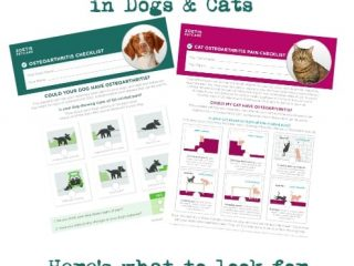 osteoarthritis signs in dogs and cats