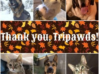 Thankful Tripawds Thanksgiving 2019