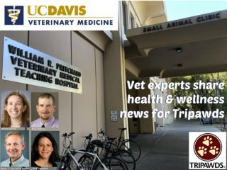 Tripawd Health Tips UC Davis Vet Experts