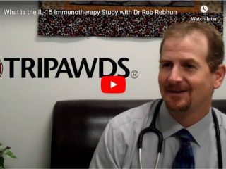 UC Davis Dr. Rob Rebhun interview