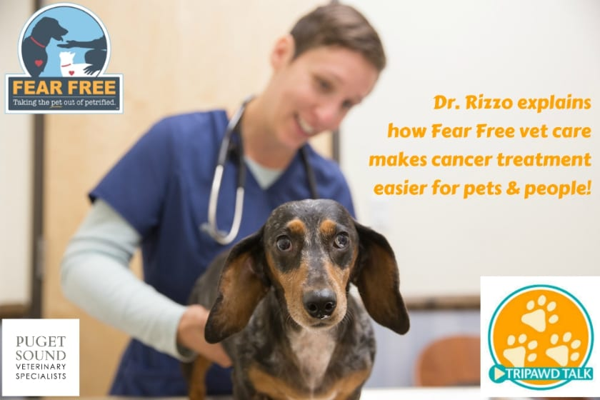 fear free cancer care for Tripawds