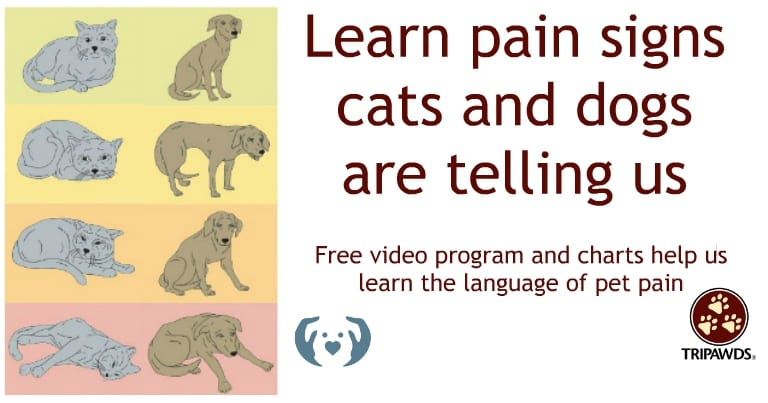 Pet Pain Signs Cats and Dogs