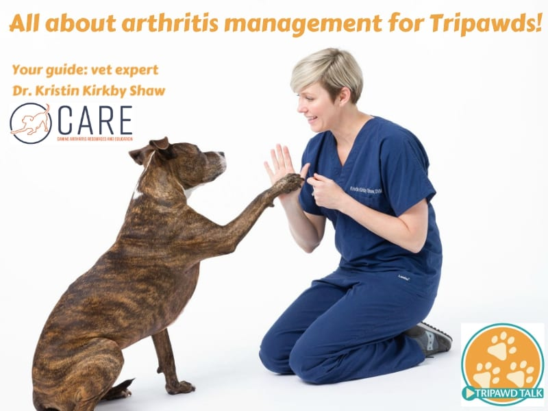 arthritis in Tripawd dogs and cats