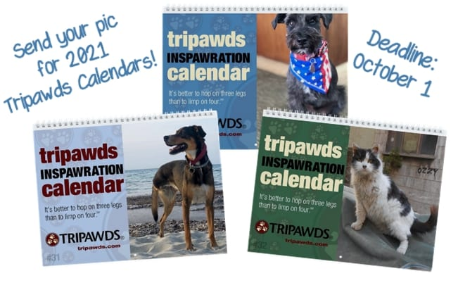 2021 Tripawds Calendar Photos