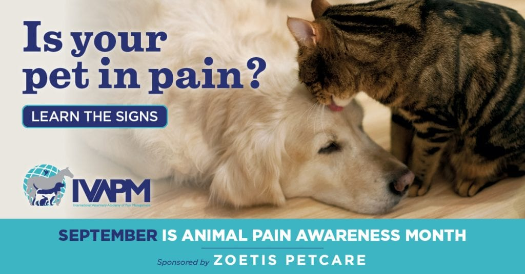 pet pain expert tips