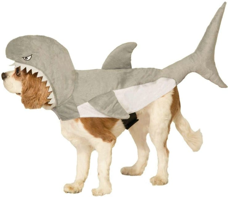 Tripawd Halloween costume idea