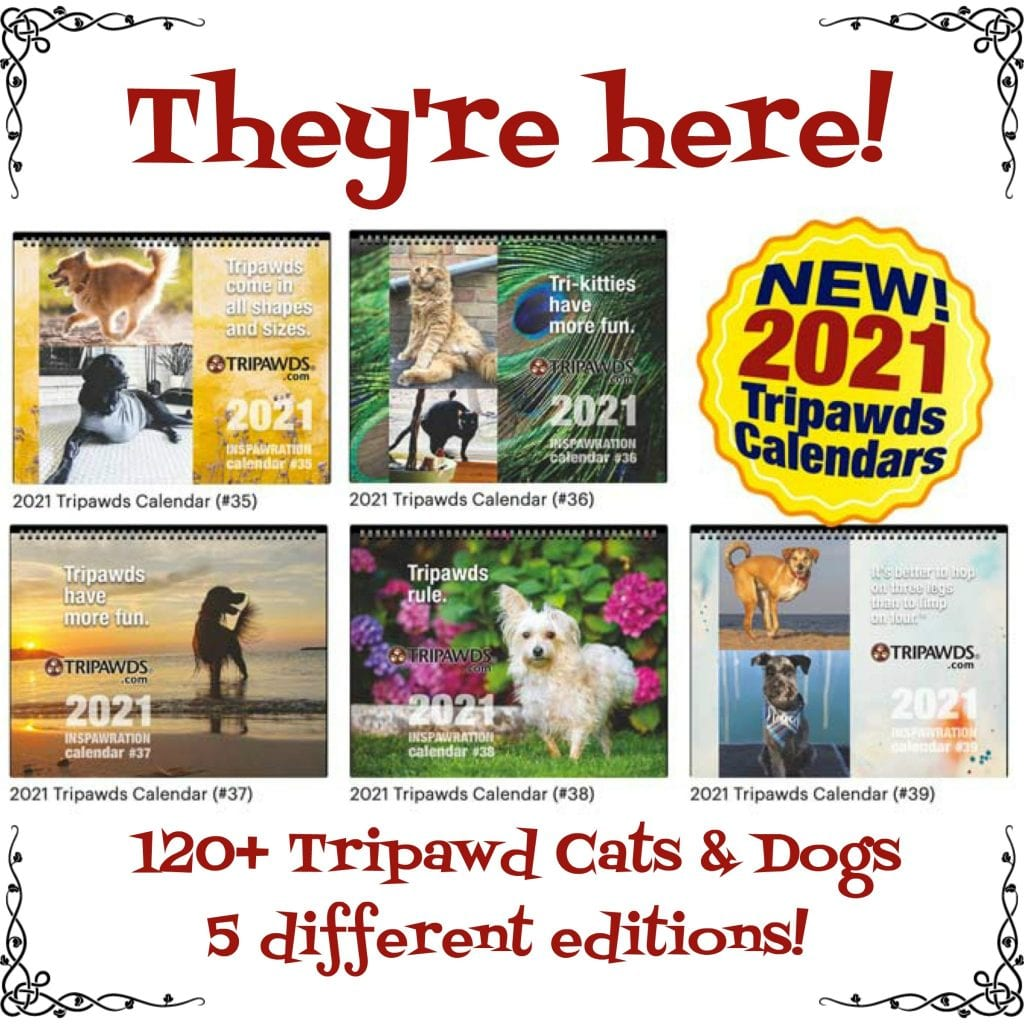 three-legged pets calendars